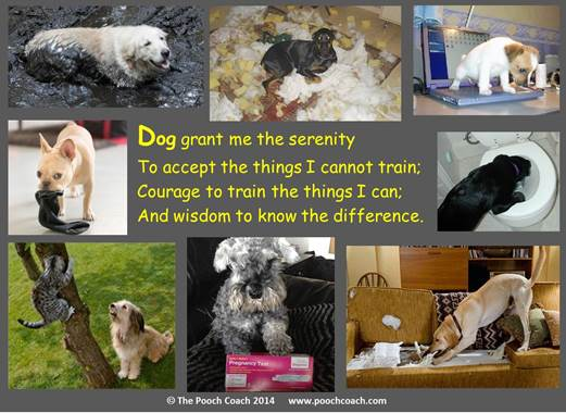 Dog Serenity Prayer - The Pooch Coach Dog Training