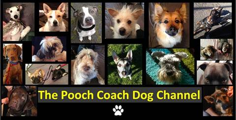 The Pooch Coach dog training methodolgy