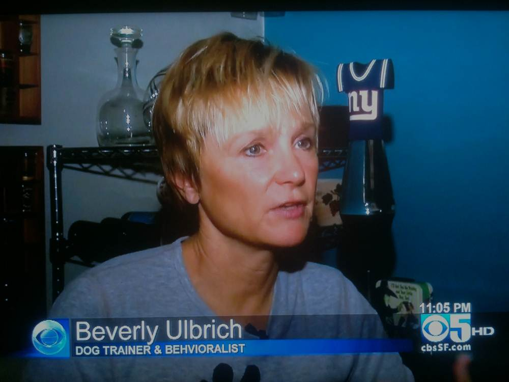 Pooch Coach - Beverly Ulbrich CBS Pitbull Interview (Jan 2013)