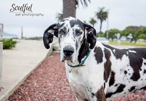 soulful-pet-photography-the-pooch-coach-small
