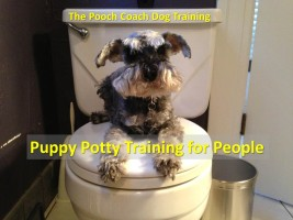 Puppy Potty Training by The Pooch Coach Dog Training