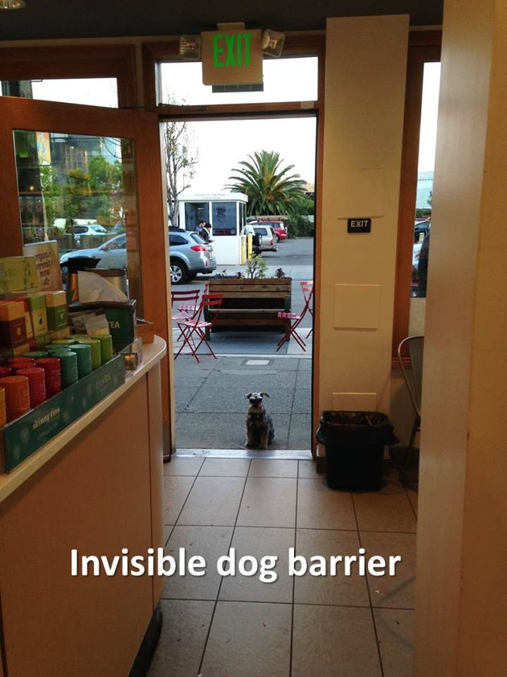 dog training san francisco
