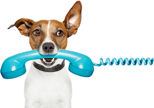 Book A Phone Consultation The Pooch Coach