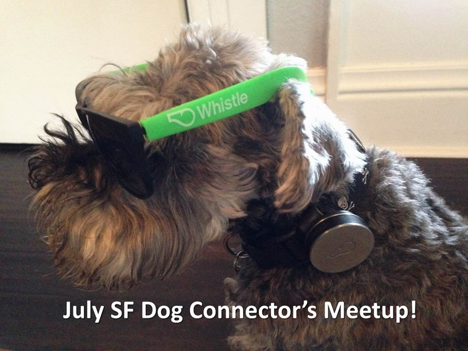 Dog Connector's Meetup!