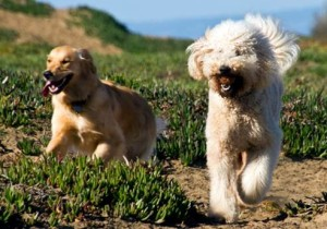 Dog Obedience Training Doggy Protection Services
