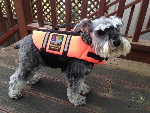 teaching a dog to swim