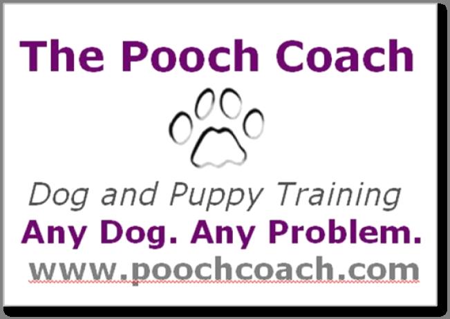 Service Dog Training Sf