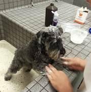 dog sprayed by a skunk