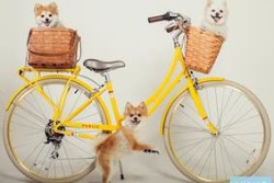 PublicBikes-The Pooch Coach