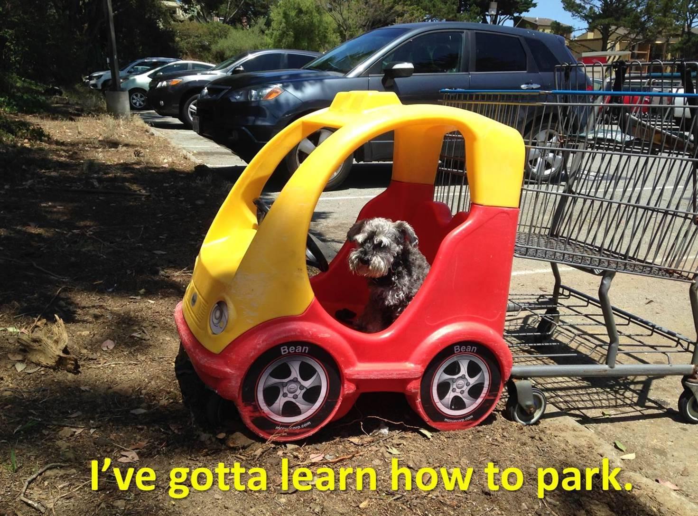 dog obedience training san francisco