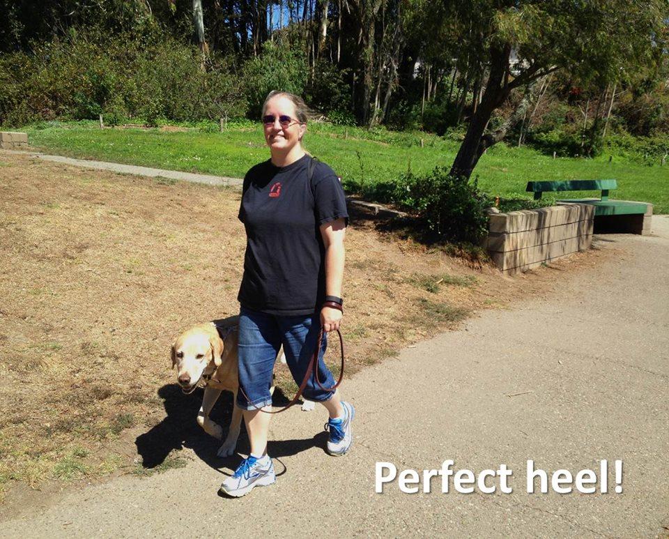 Teach your dog to Heel