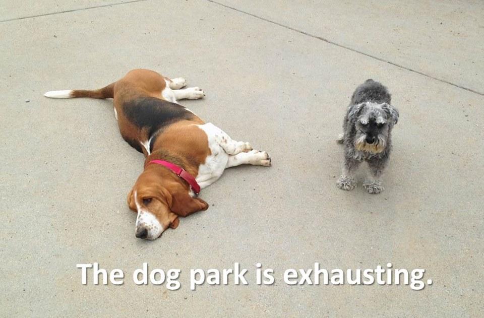 Dog Park Behaviors