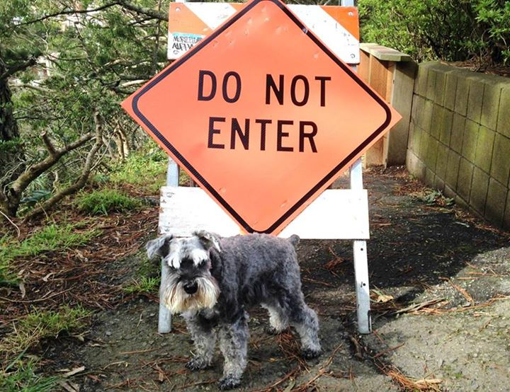 Dogs Respecting Boundaries