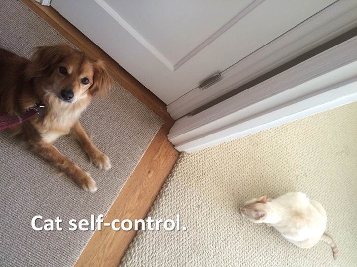 Training your dog to like cats