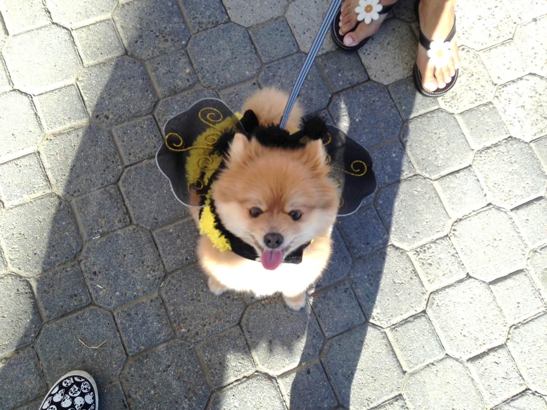 Dog Halloween Costumes Jack London Square Boo, Bark, Brews & Bites
