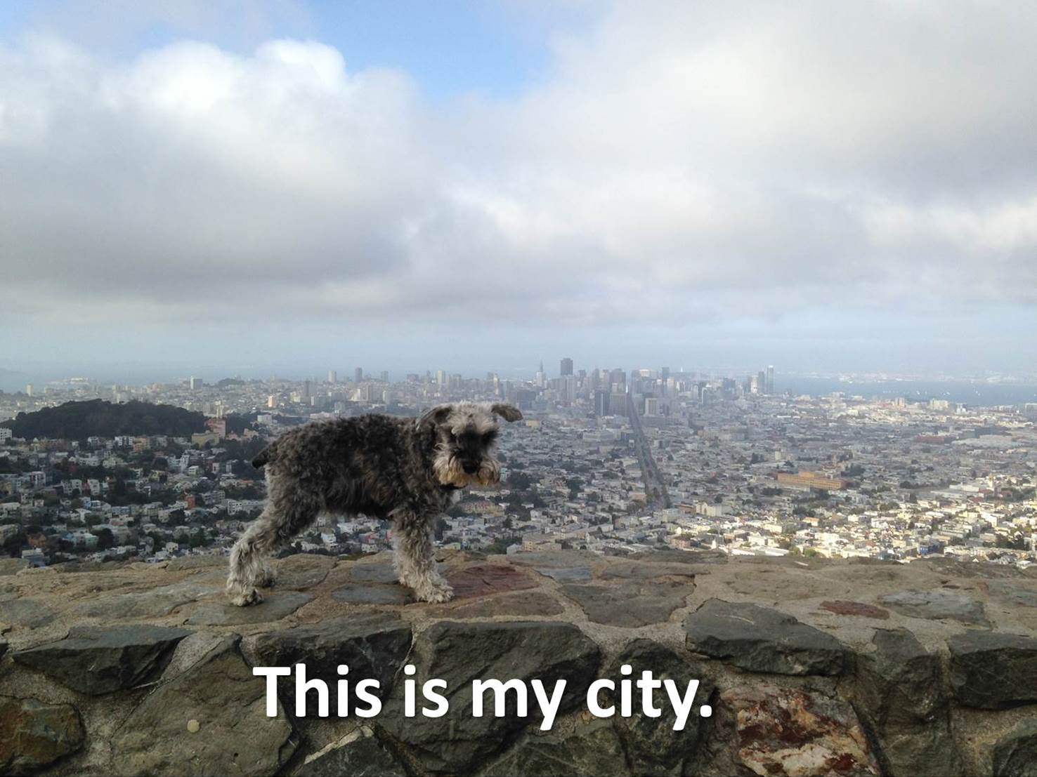 City Dog or Country Dog?