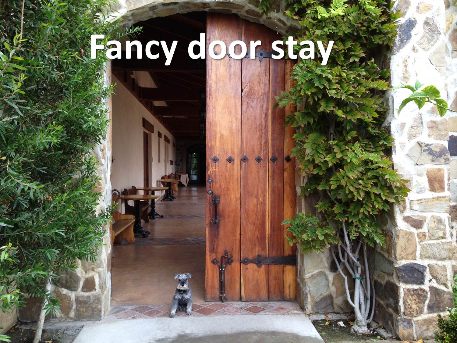 door stay - training a dog not to run out the door