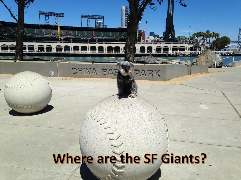 Dogs & Baseball