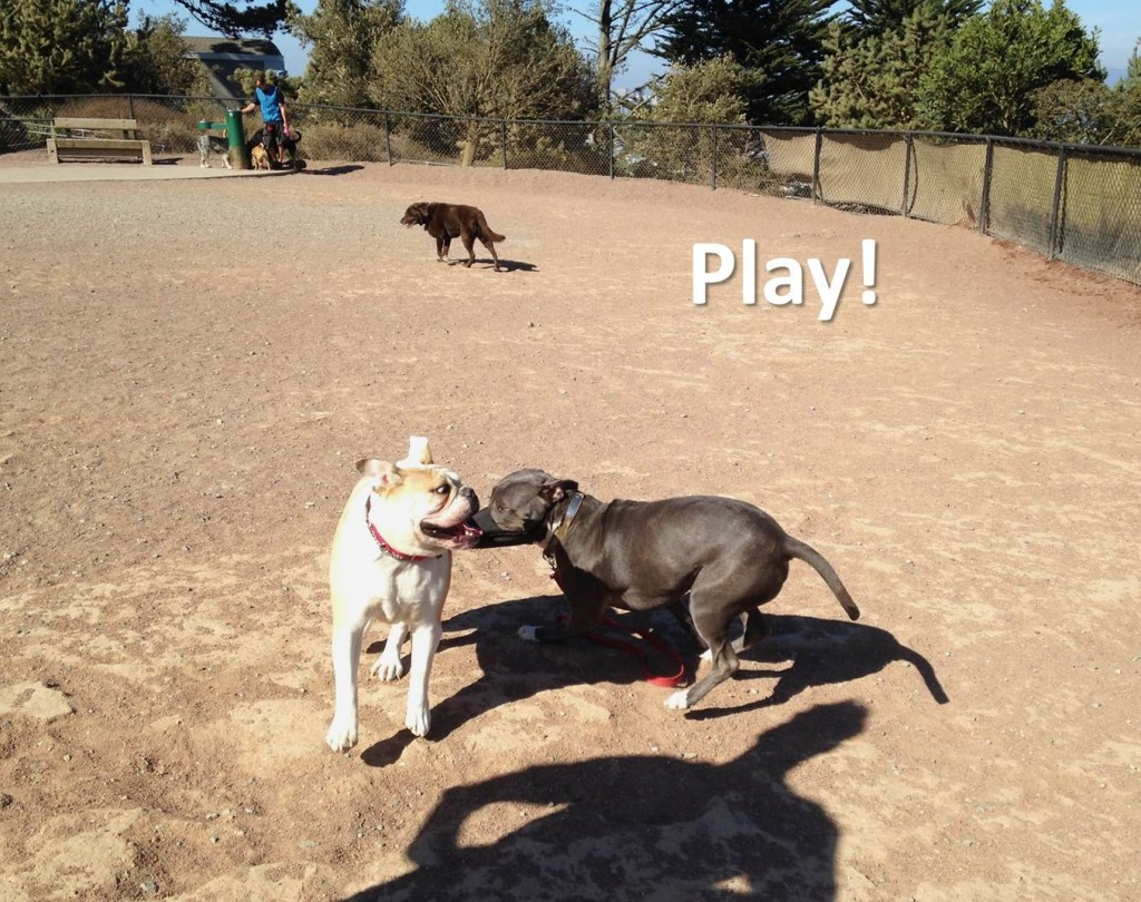 Polite dog greeting steps