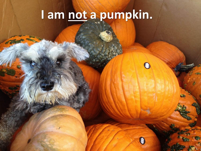 Halloween dogs & doorbells tips