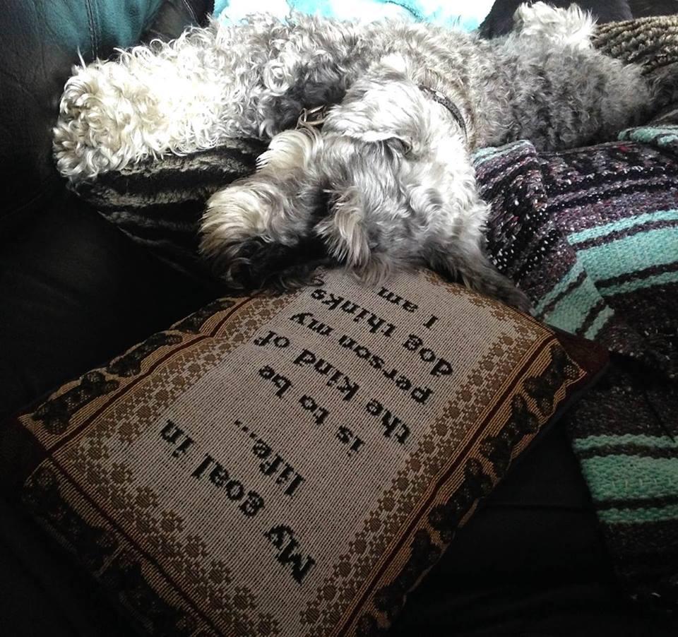 san francisco dog training
