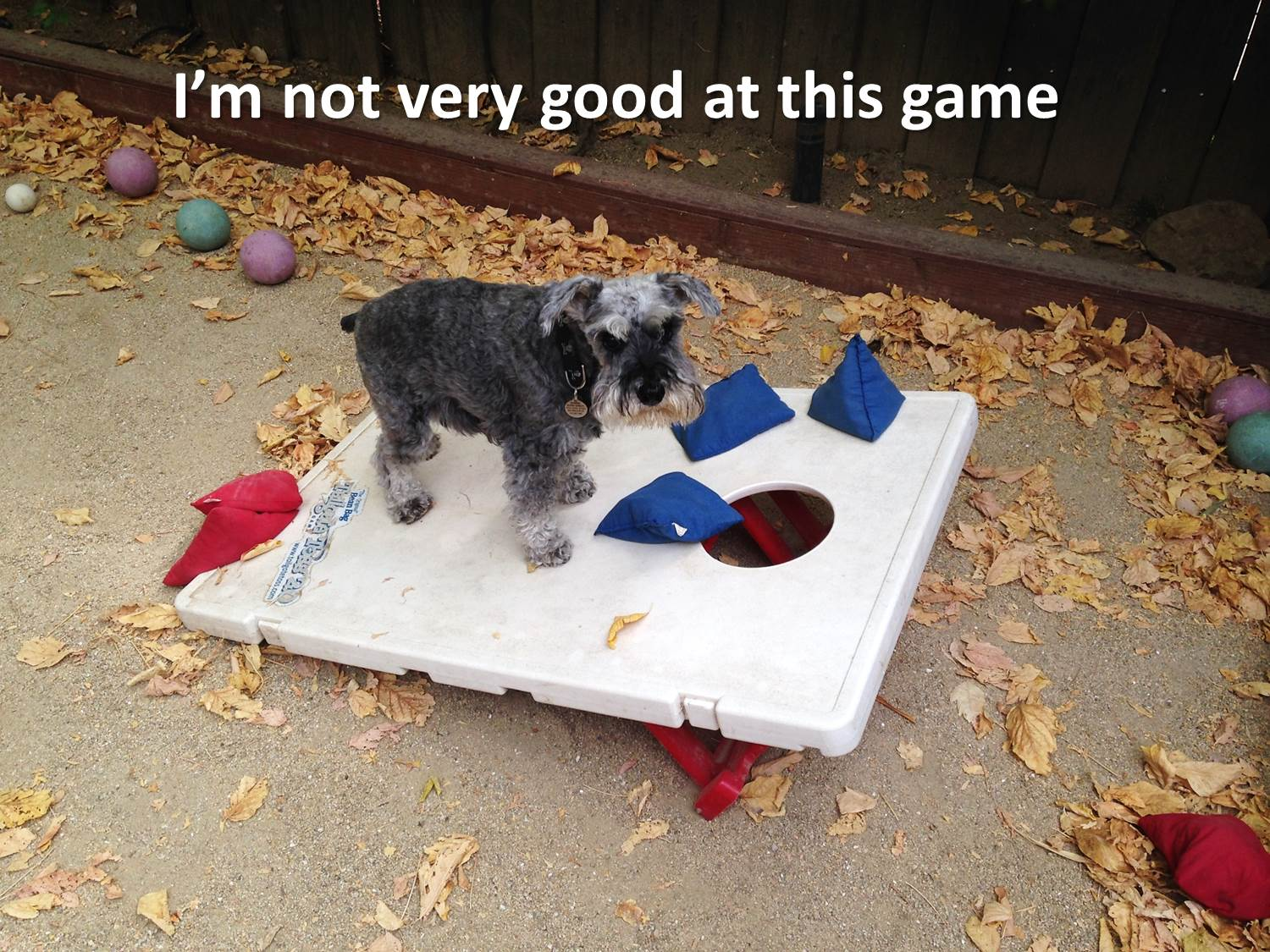 bed mouse game for dogs