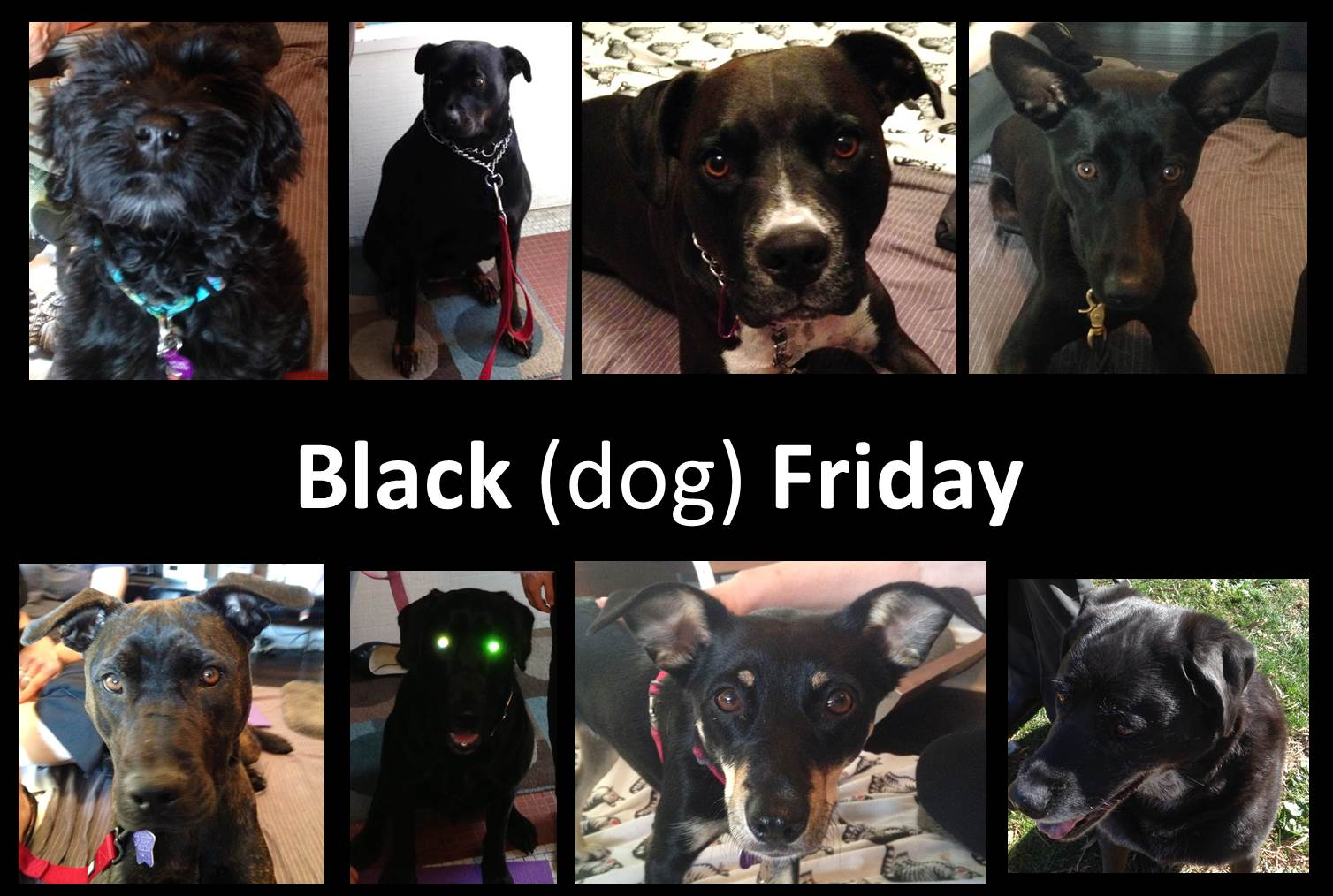 BLACK DOGS AND ADOPTION RATES