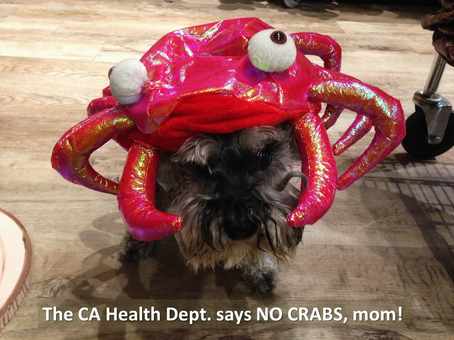 Can dogs eat crab