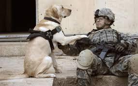 dog veteran
