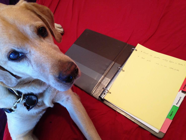 Dog training homework binder