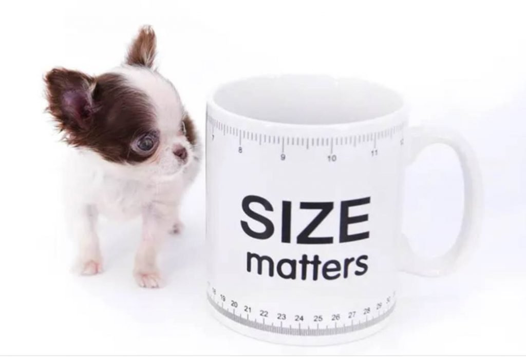 small dogs - world's smallest dog
