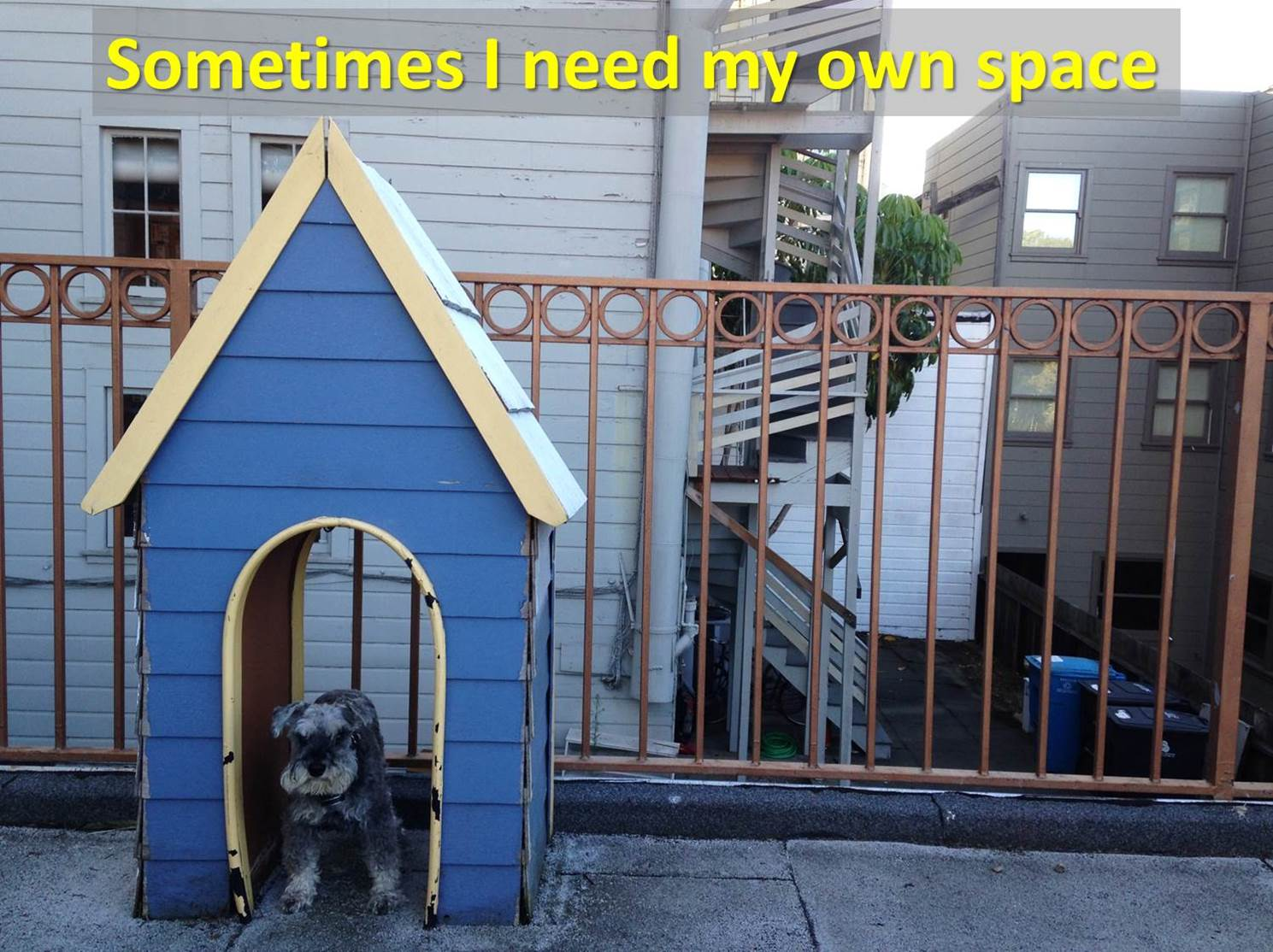 Giving your dog some space