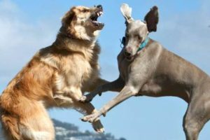 san francisco dog behaviorist