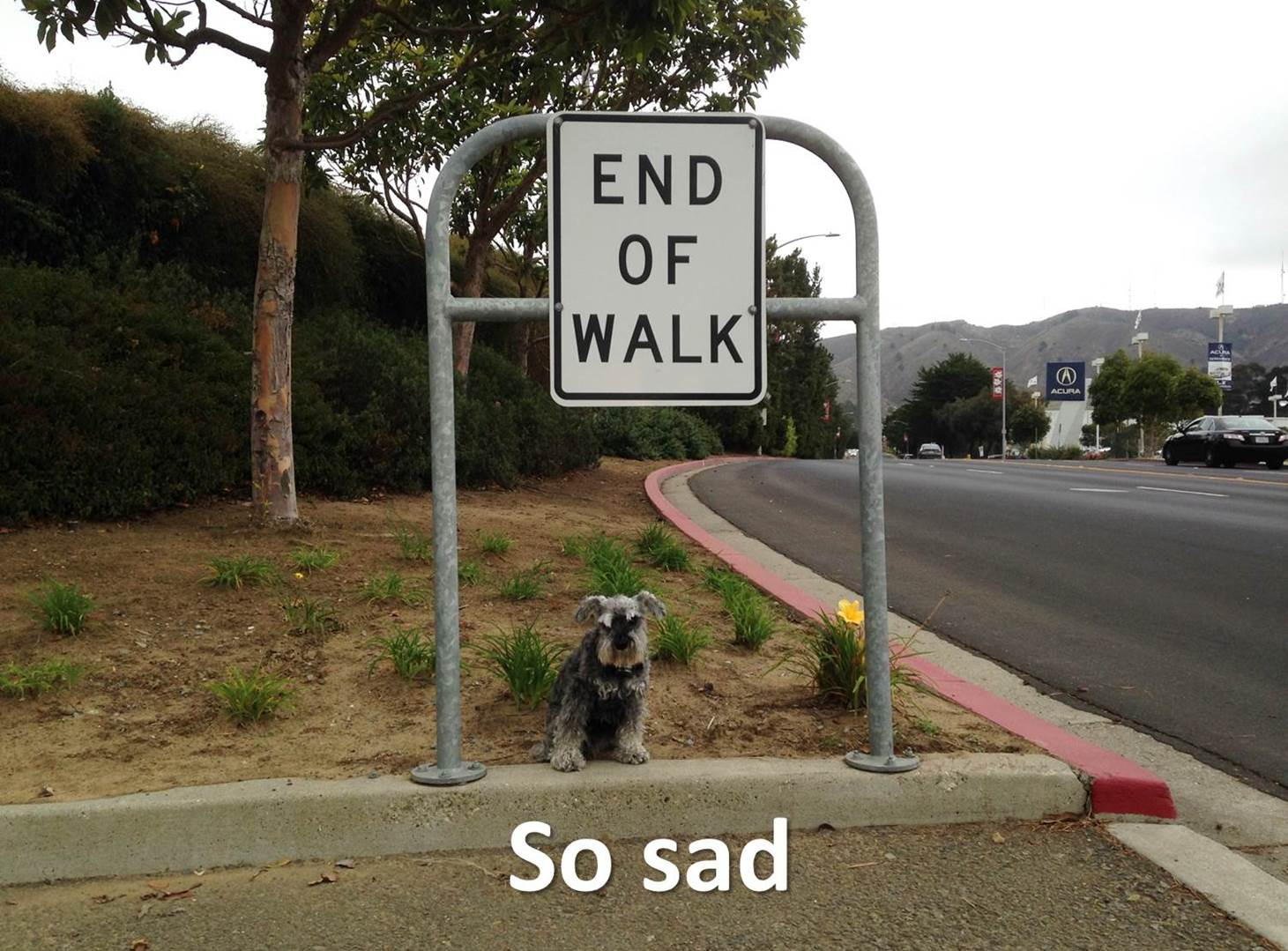 SAD SIGNS FOR DOGS