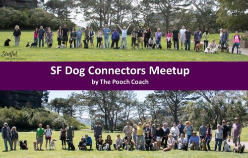 San Francisco Dog trainer Meetup Group