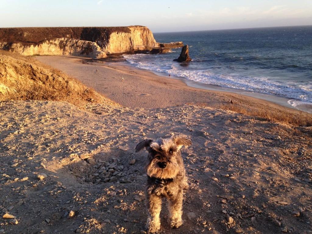 the sunset with dog on slowcoast