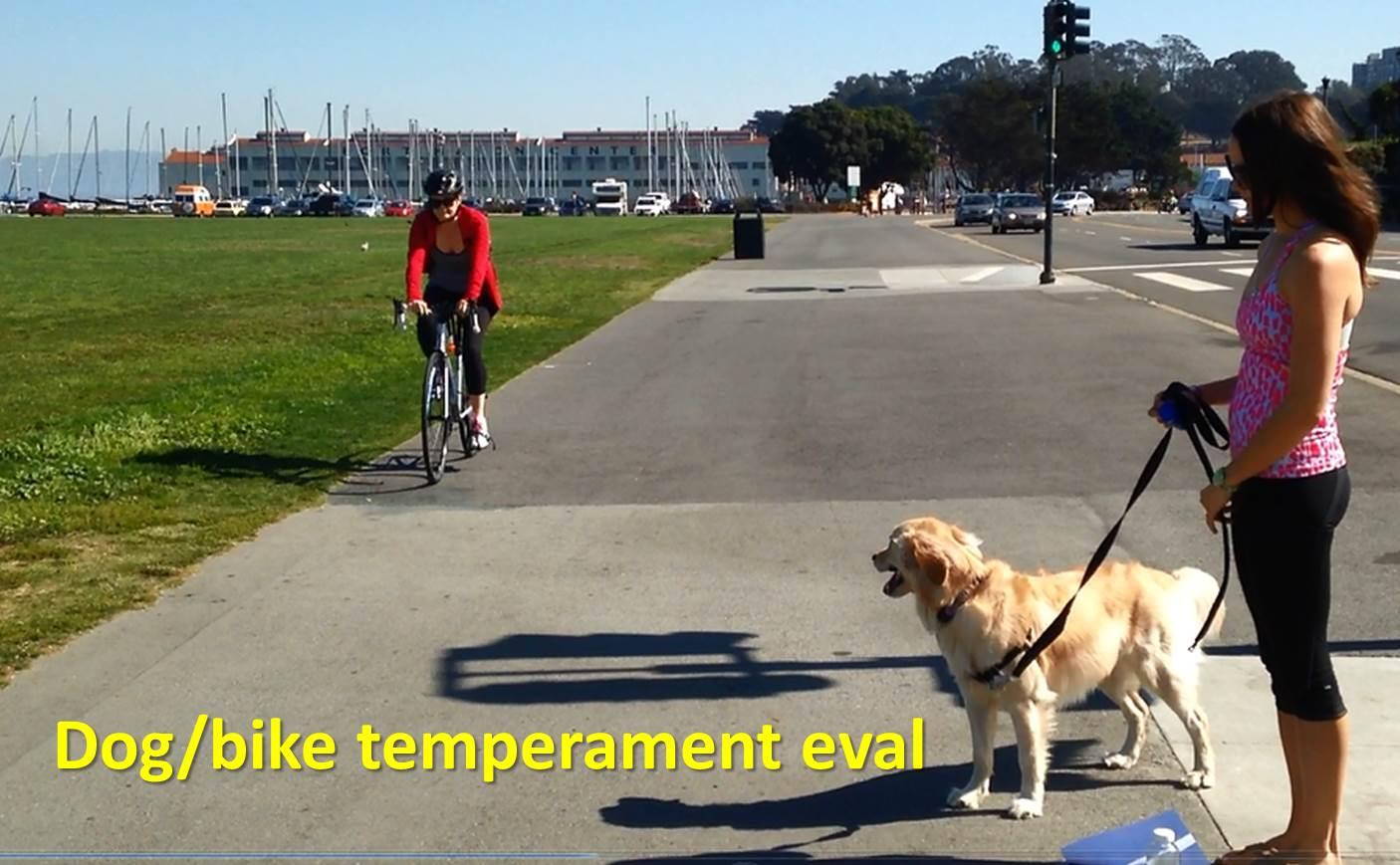 Dog Temperament Evaluations