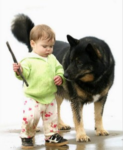 Dog Aggression Towards Children
