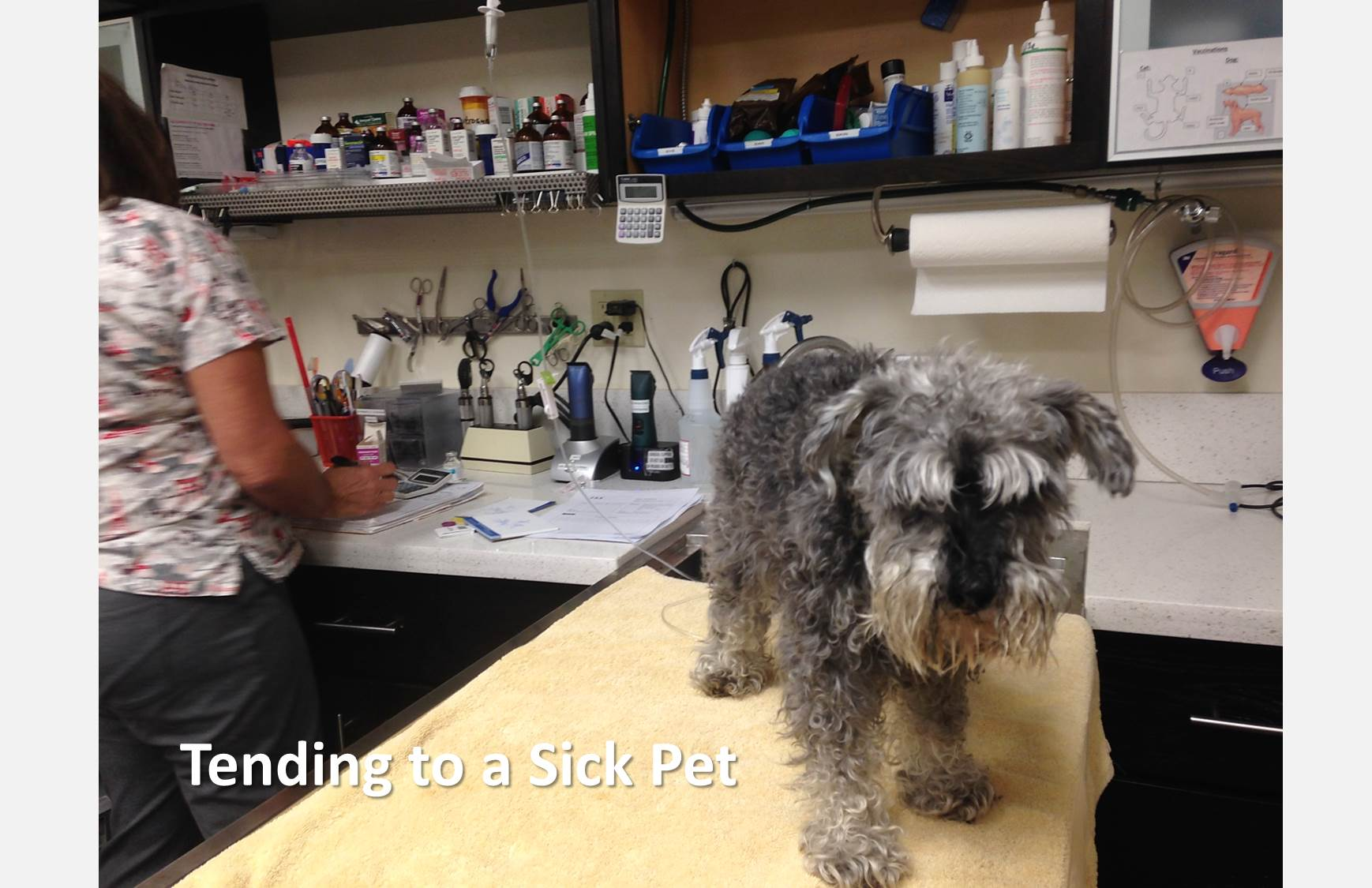 the heartbreak of tending to a sick dog