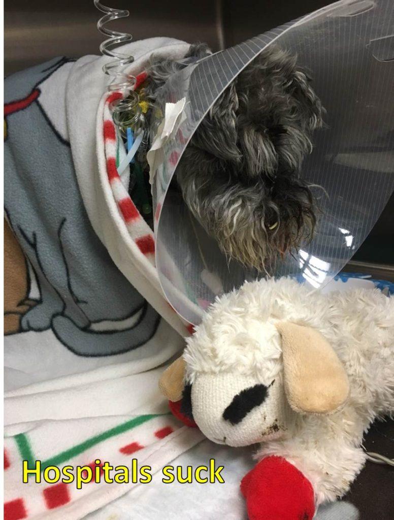 choosing the best pet emergency hospital