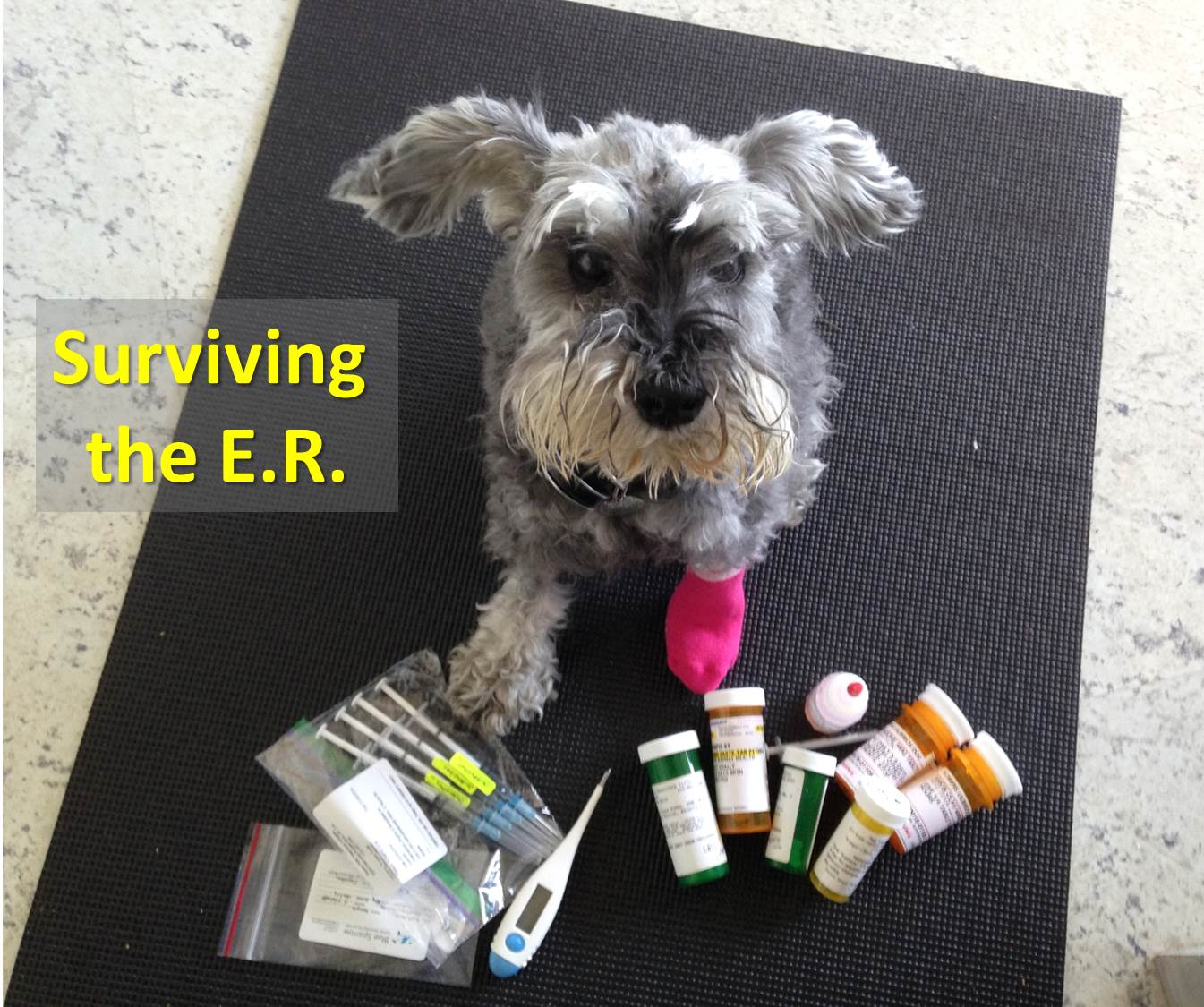 Choosing the best pet emergency hospital