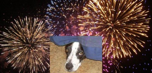 Helping Dogs with Fear of Fireworks