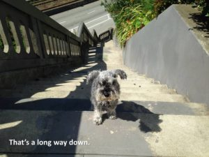 Train a dog to walk down stairs