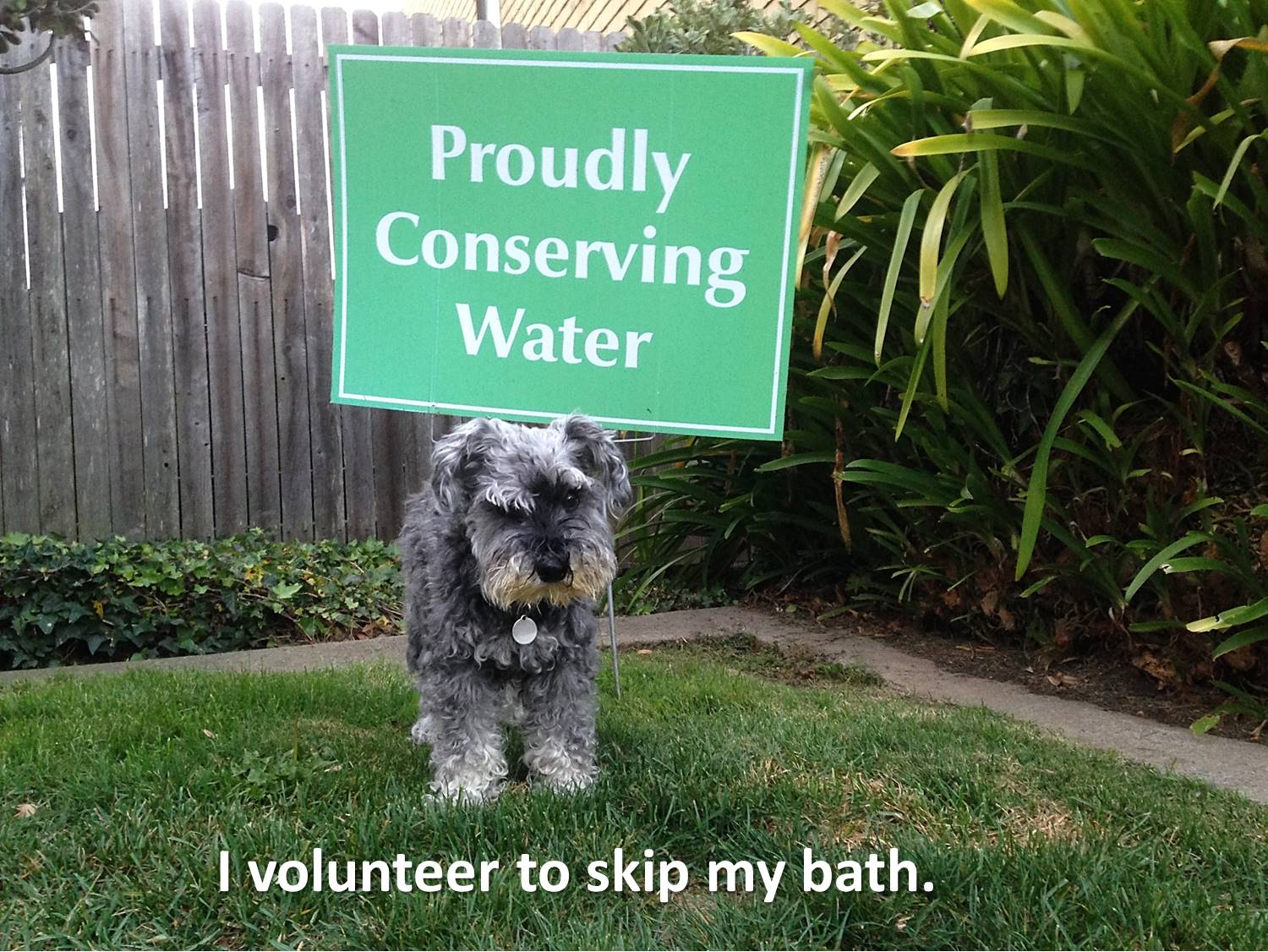 How much water should your dog drink?