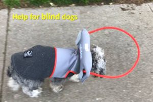 help for blind dogs