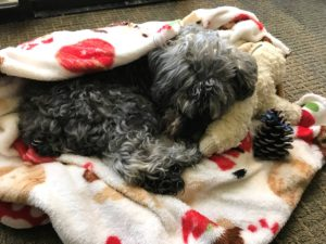 coping the grief of losing your dog