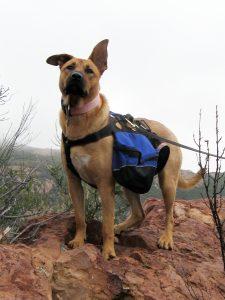 Dog Hiking Tips dog hiking backpack