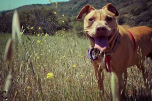 Dog Hiking Tips