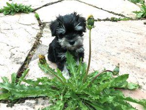 5 Ways To Create A Dog-Friendly Garden