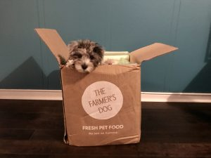 healthy dog food and treats the farmers dog